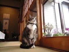 医泉寺のネコ