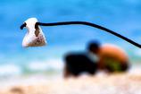 貝殻の思い出