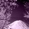 富士桜の舞