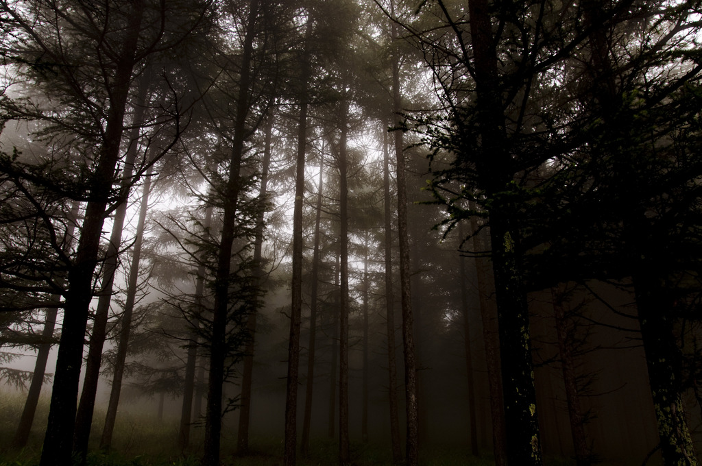 Secret Forest
