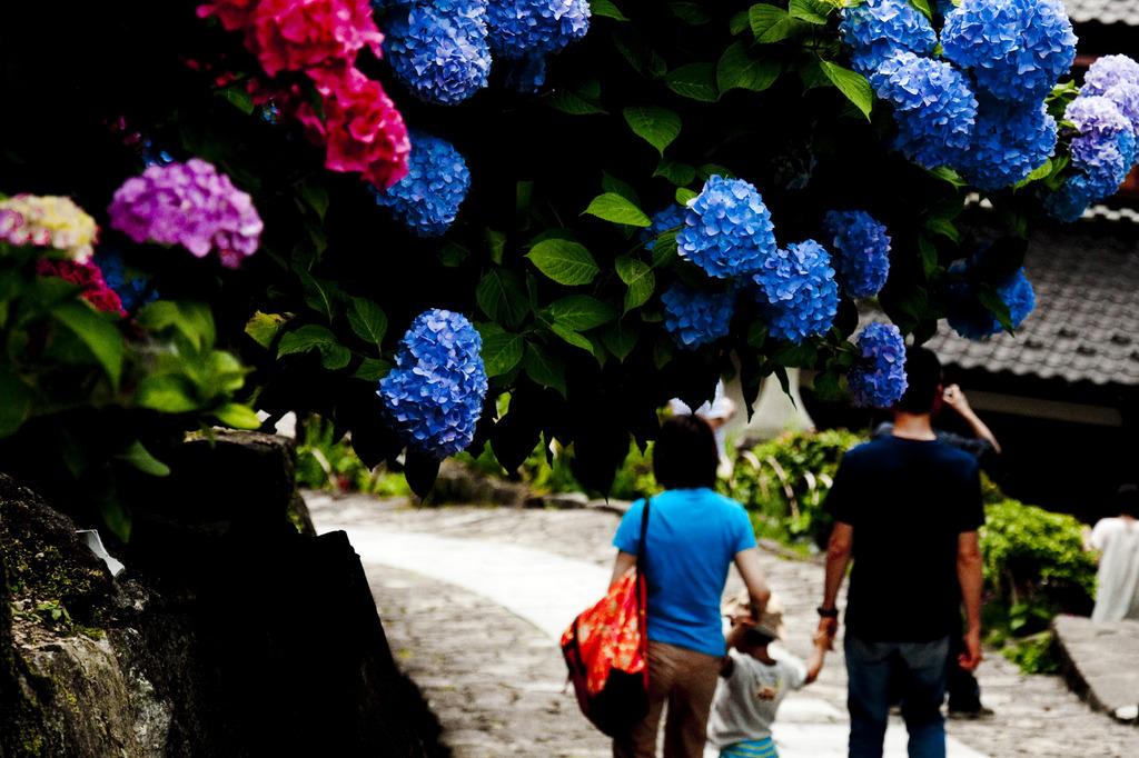 紫陽花ストリート
