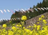 菜の花の休日
