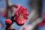 春を呼ぶ 1