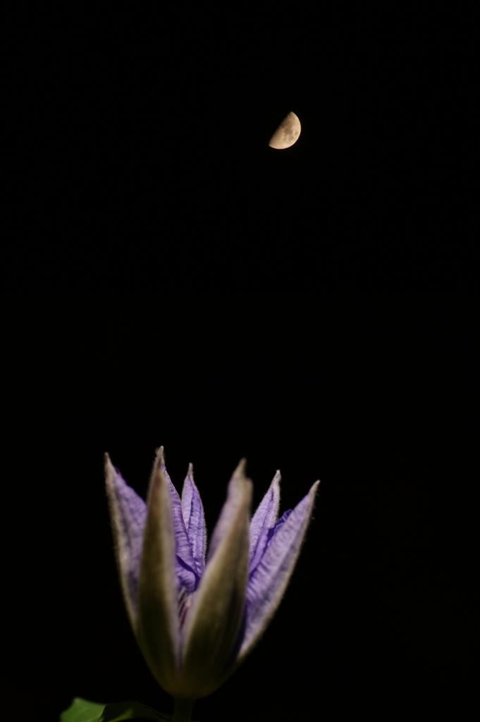 見上げる上弦の月
