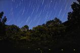 夜空と地上の星たちのコラボ