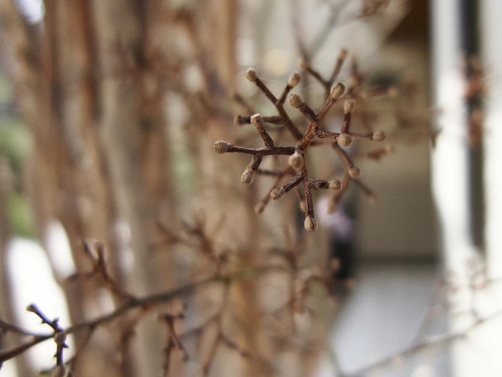 春の線香花火
