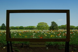 Frame in frame