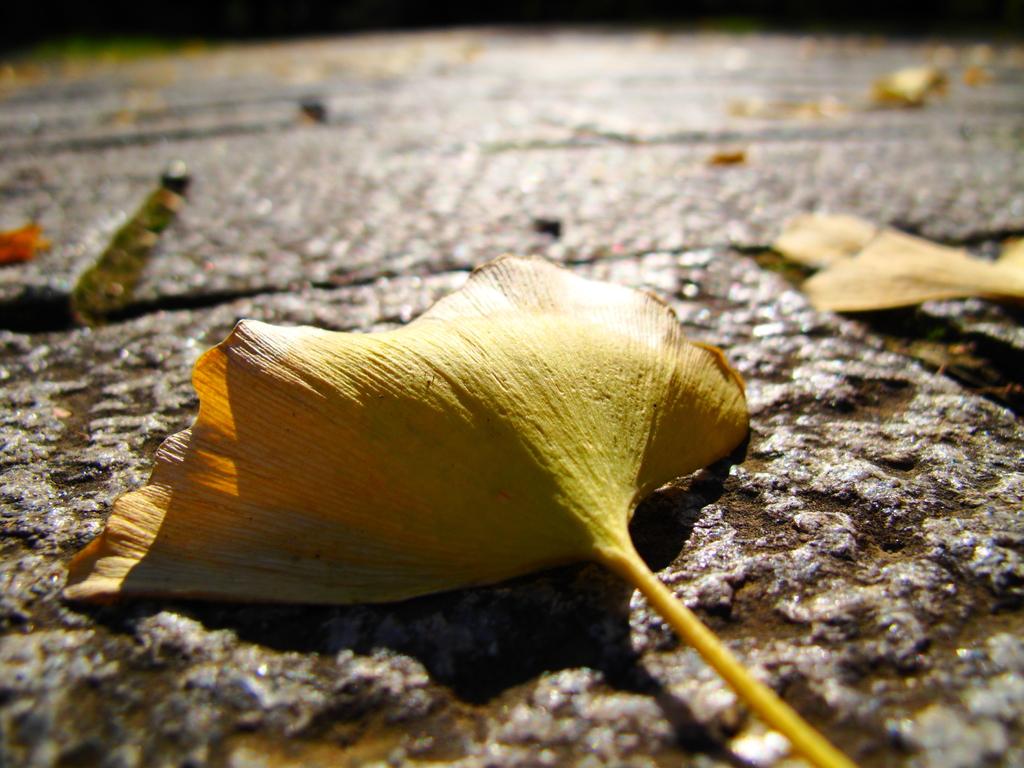 秋の終わりの頃。