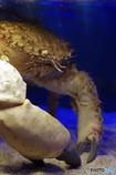 ムキムキな蟹