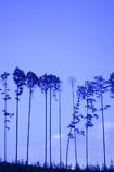なんとなく 青い夕方