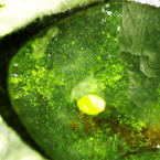 PENTAX PENTAX K-5で撮影した風景(さかさ菩薩)の写真(画像)