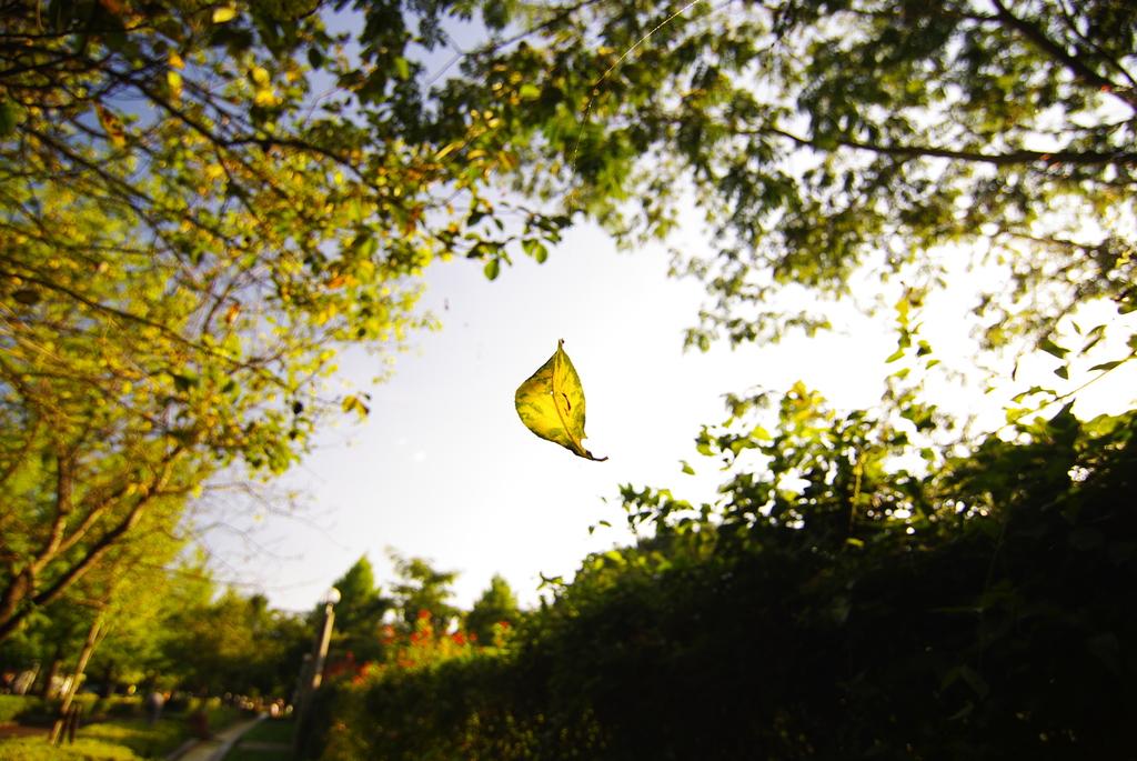 秋の気配 一葉