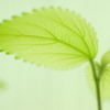 translucent green III