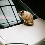 MINOLTA CLEで撮影した動物(Cat's Eyes)の写真(画像)