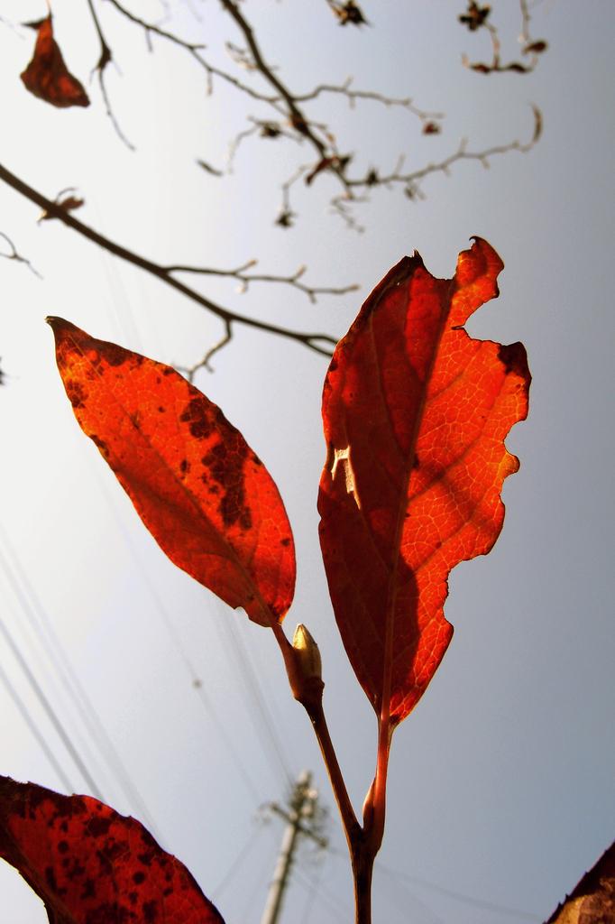 今日の空 2009.10.31