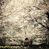 桜舞い散る頃に