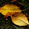 秋を見つけた頃