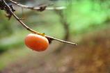 柿本のひと麻呂