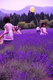 紫の薫りに誘われて