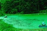 ジュンサイ沼の乙女達