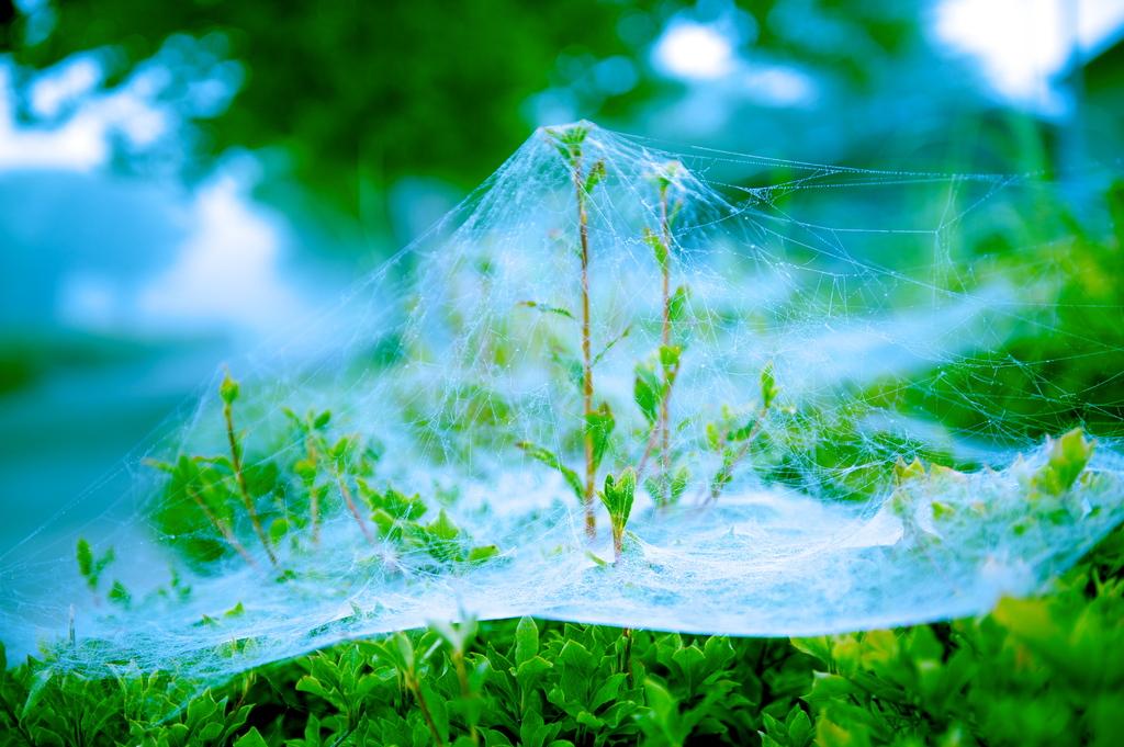 クモの糸のハンモック