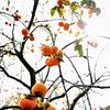 秋だぜーっ!