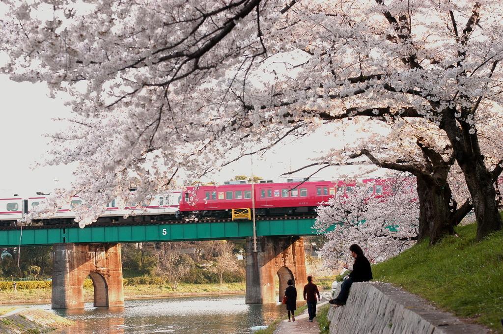 桜まつり 01