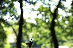 カブトムシ 飛翔
