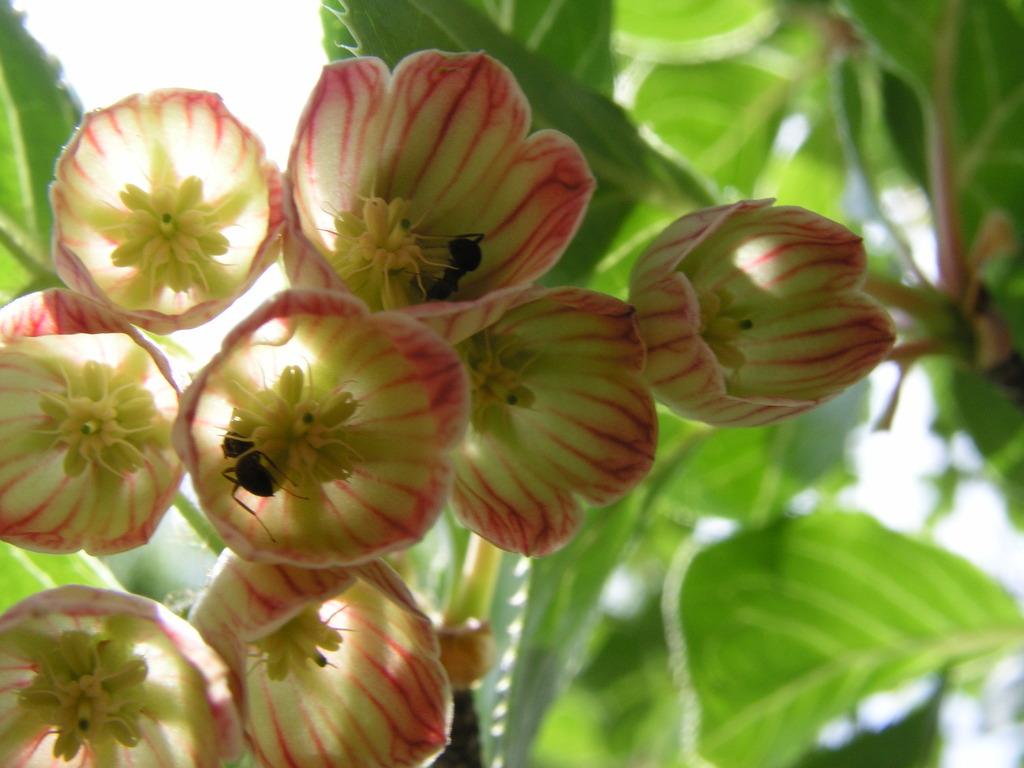花のシャンデリア