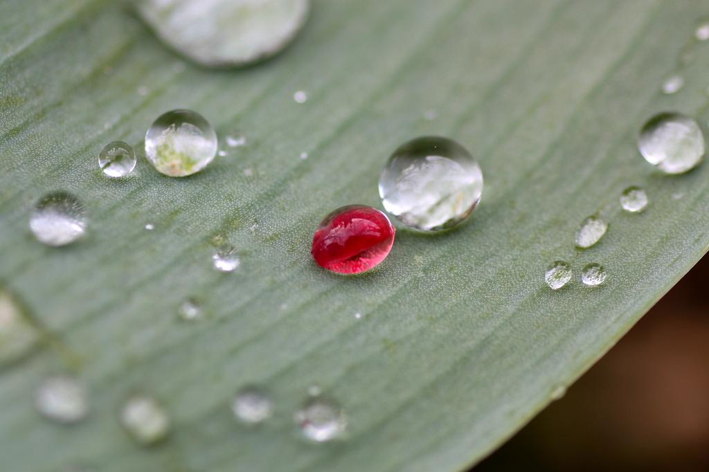 紅葉の水玉