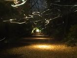 六儀園 2009冬