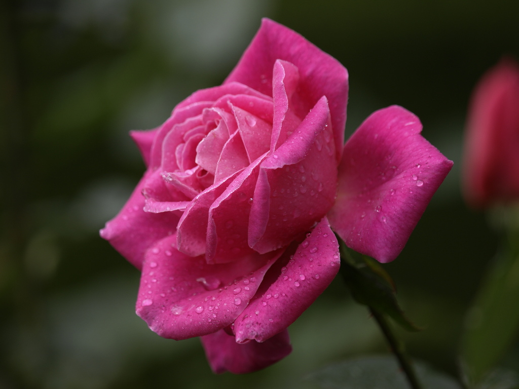 ピンク ピース