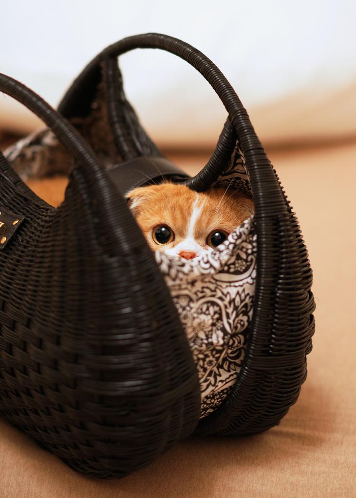 鞄にスッポリ