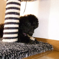 RICOH CX1で撮影した動物(がんもさん)の写真(画像)