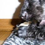 RICOH CX1で撮影した動物(がんも)の写真(画像)