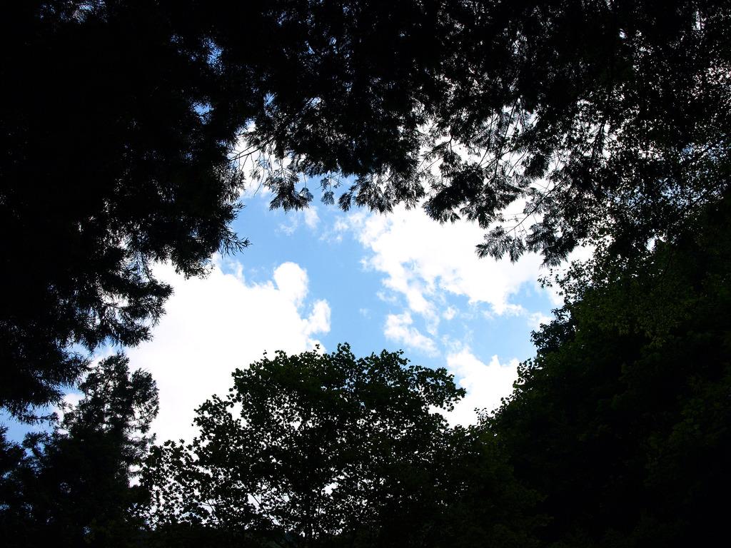 樹々の隙間から