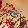春採湖の野鳥-8534