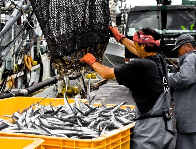 花咲秋刀魚-3680