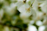 Flower-4130
