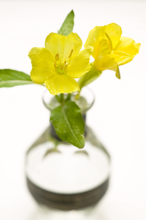 朝露の花-6861