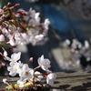 春のステージ