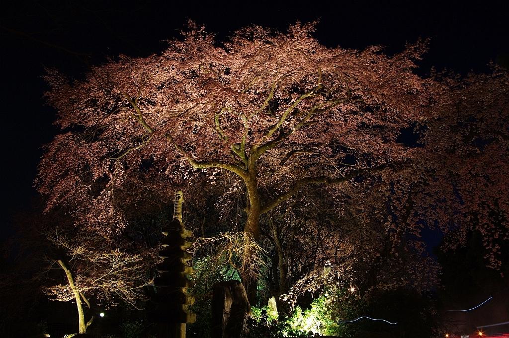佐野桜畑夜