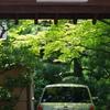 梅雨入り前の木漏れ日