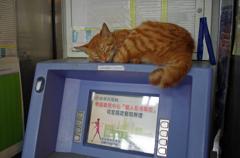 猫の特等席