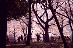 SakuraPink