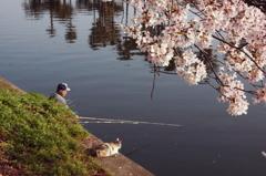 桜と釣人と猫