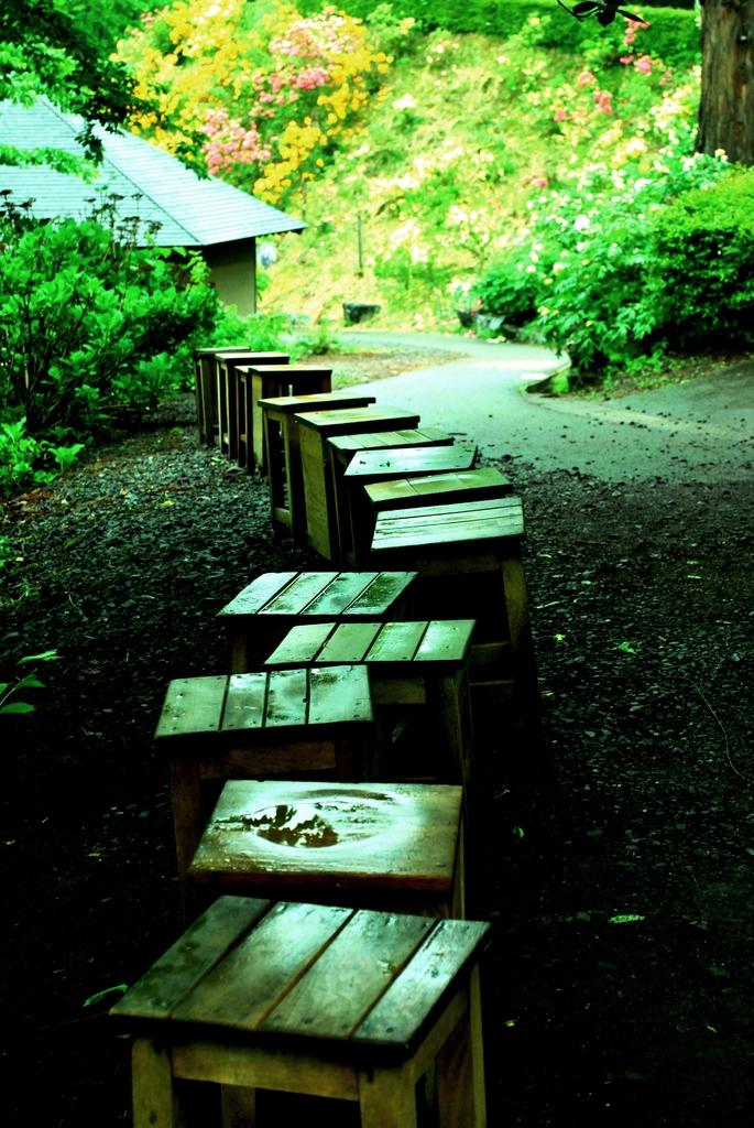 雨の日の牡丹園にて