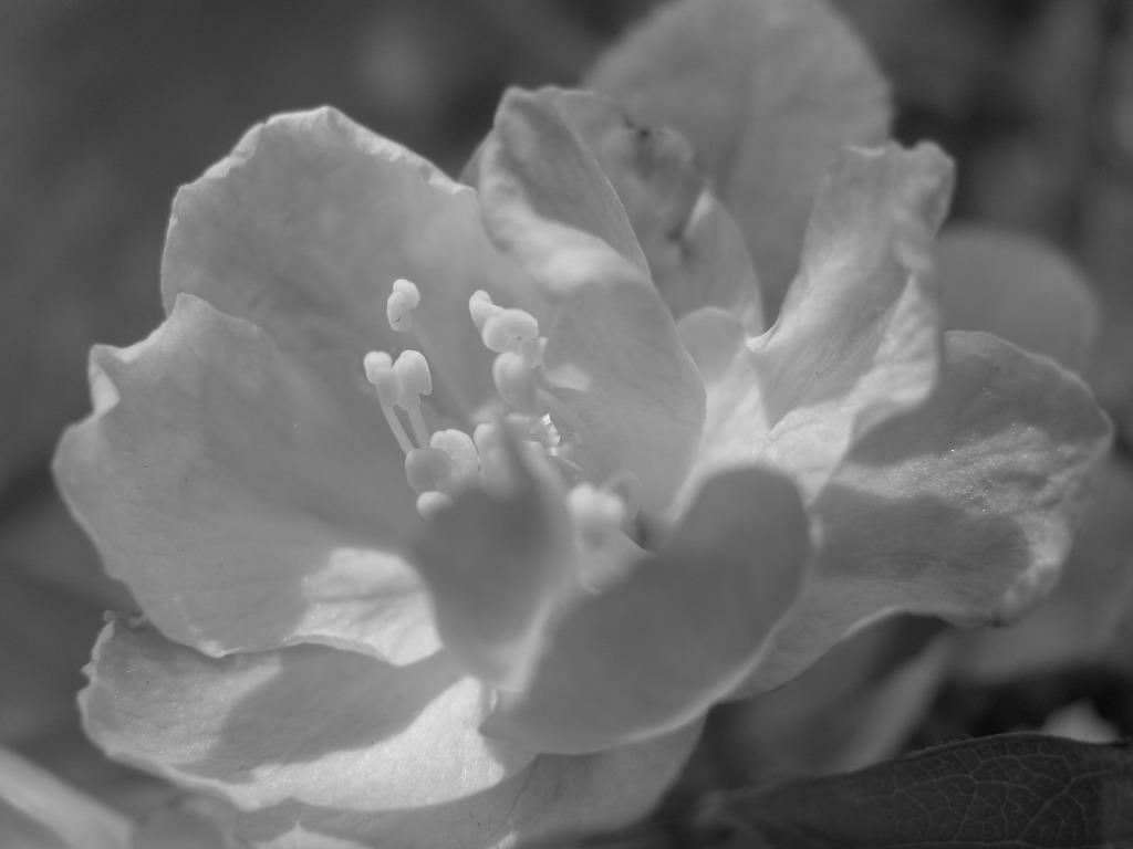 母が愛した花