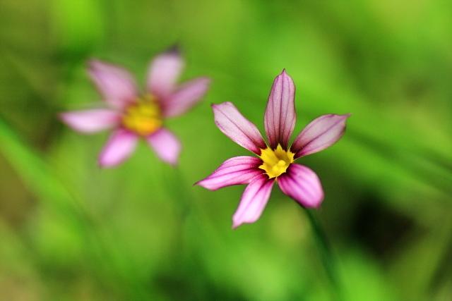 妖しく咲く花