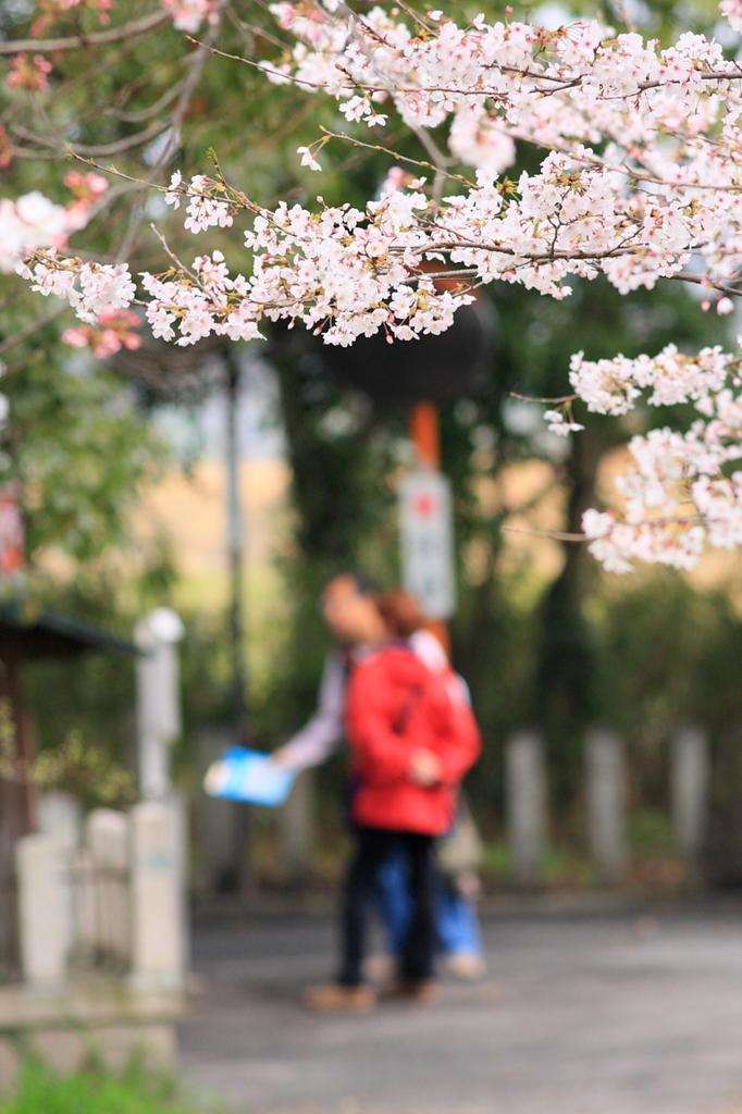 花見walk